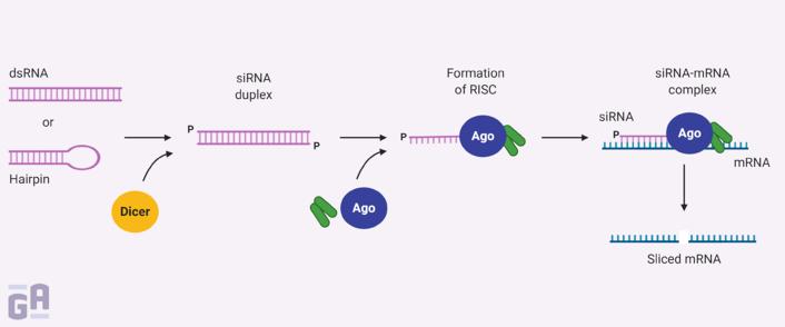 0067 - siRNA Therapeutics (1)