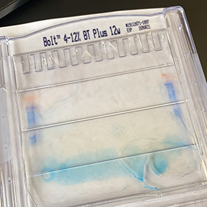#8_0086 - Lab Fails 2020_300 x 300