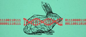 information in  rabbit DNA